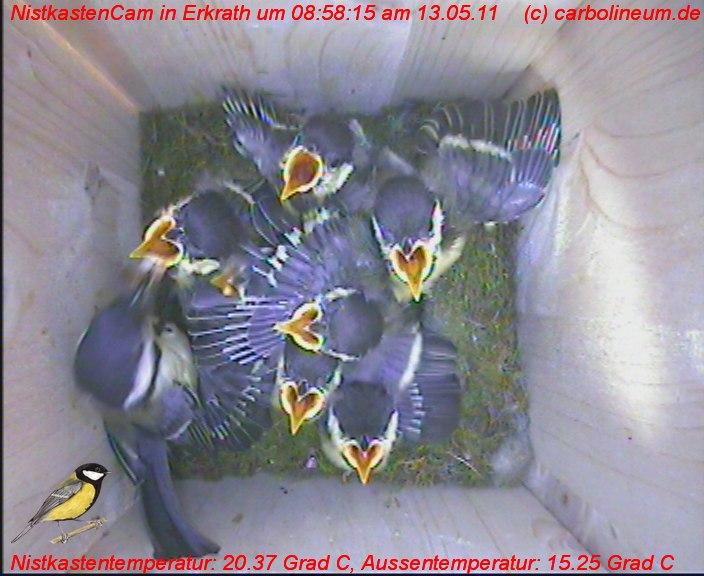 nistkasten-13052011-085815
