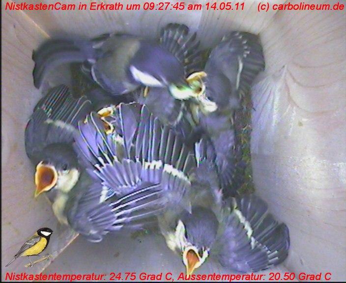 nistkasten-14052011-092745
