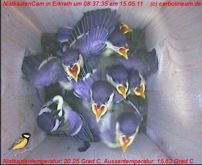 nistkasten-15052011-083735