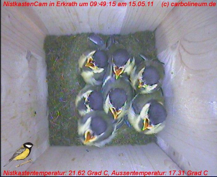 nistkasten-15052011-094915