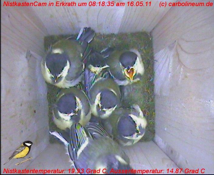 nistkasten-16052011-081835