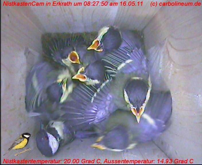 nistkasten-16052011-082750