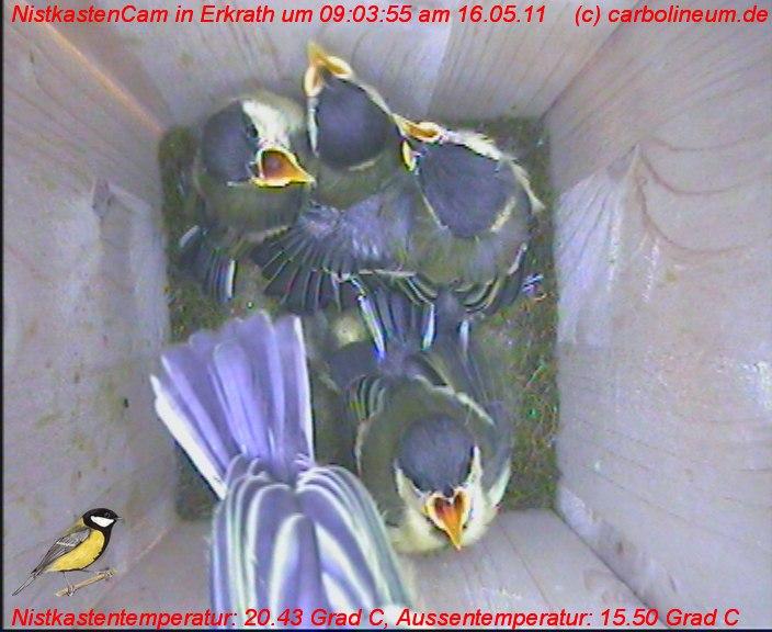 nistkasten-16052011-090355