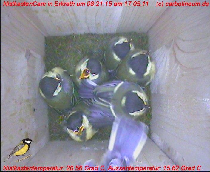nistkasten-17052011-082115
