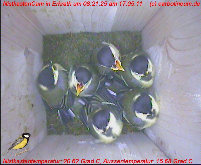 nistkasten-17052011-082125