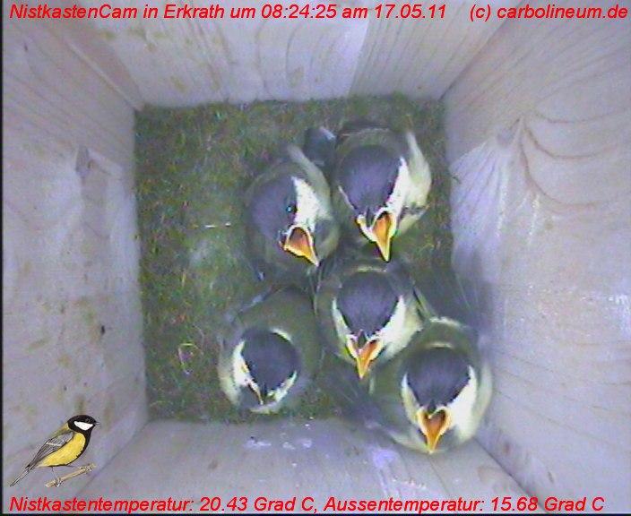 nistkasten-17052011-082425