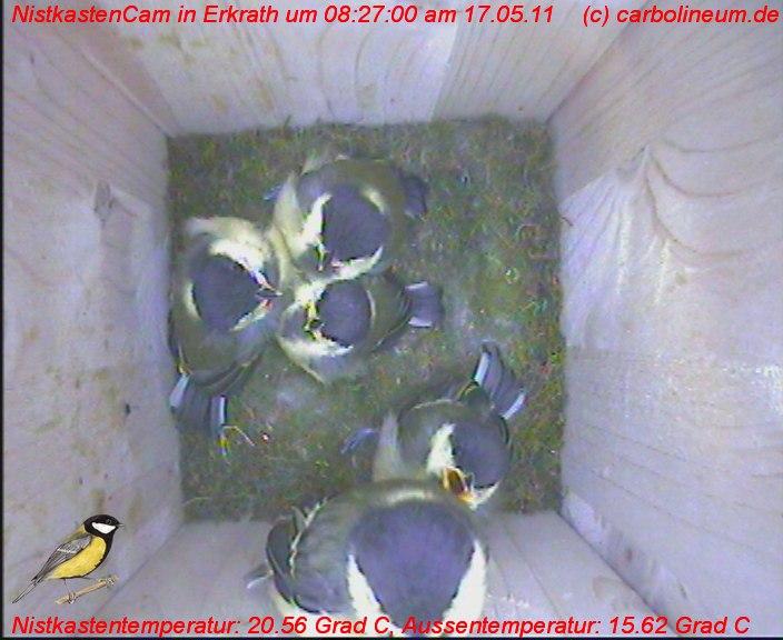 nistkasten-17052011-082700
