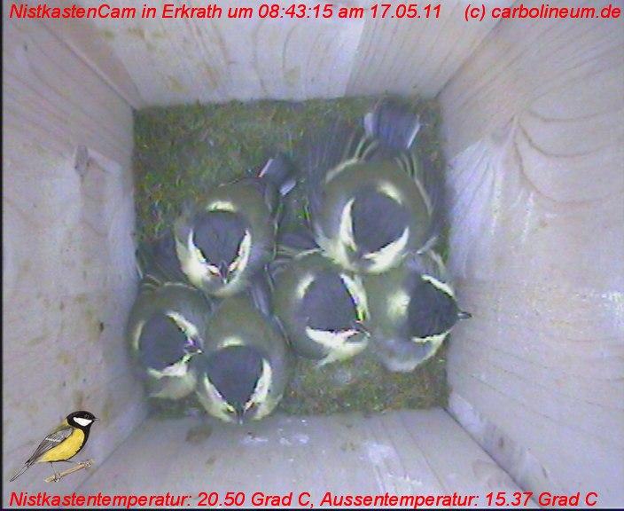 nistkasten-17052011-084310