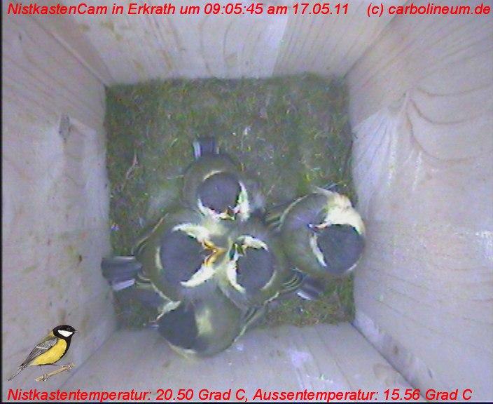 nistkasten-17052011-090555