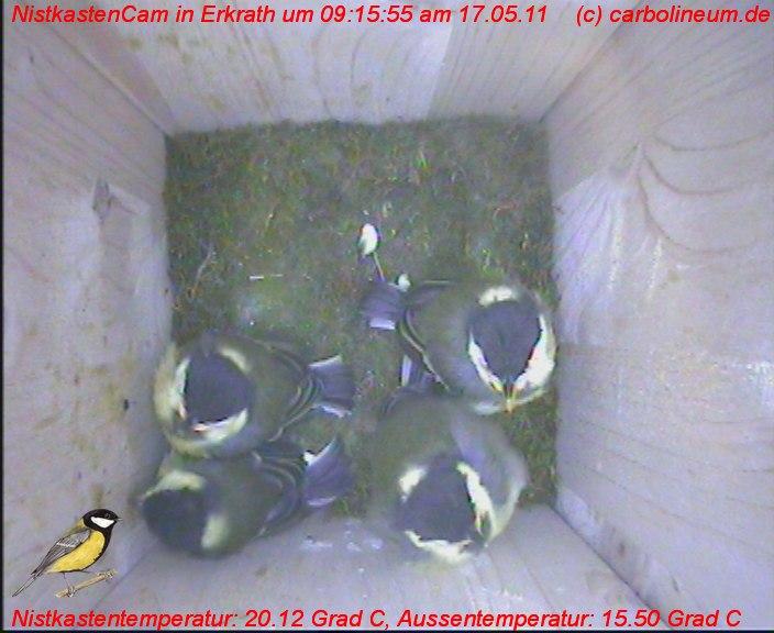 nistkasten-17052011-091550
