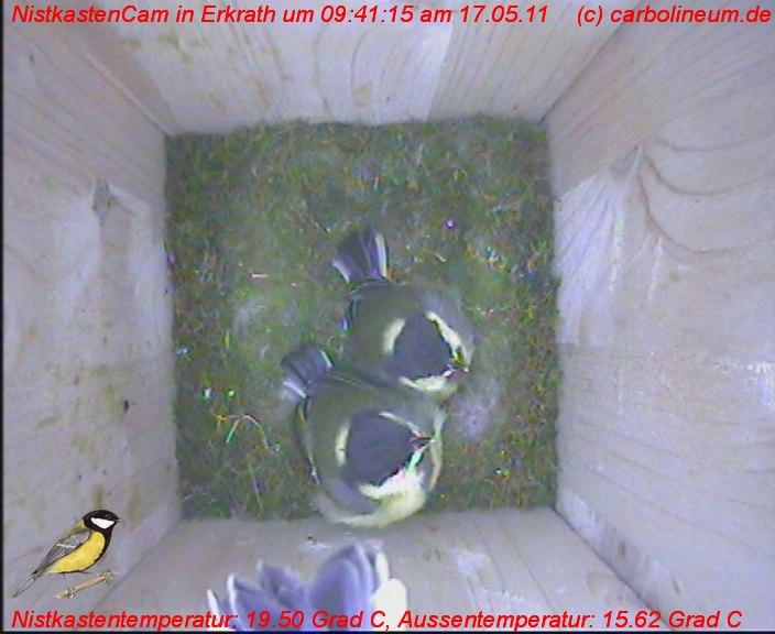 nistkasten-17052011-094125