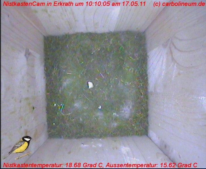 nistkasten-17052011-101005