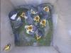 nistkasten-12052011-083605