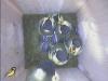 nistkasten-16052011-090405
