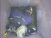 nistkasten-17052011-082135