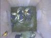 nistkasten-17052011-082805