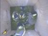 nistkasten-17052011-092005