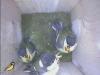 nistkasten-17052011-092415
