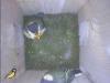 nistkasten-17052011-094510