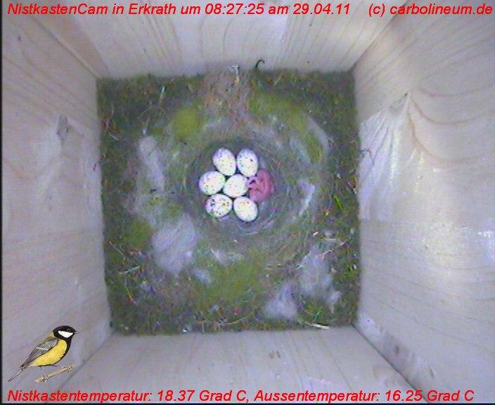 nistkasten-29042011-082720