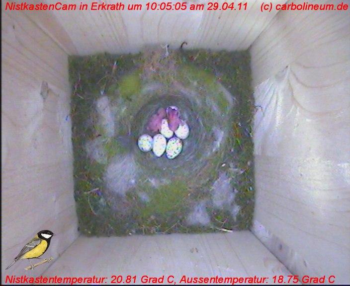 nistkasten-29042011-100500