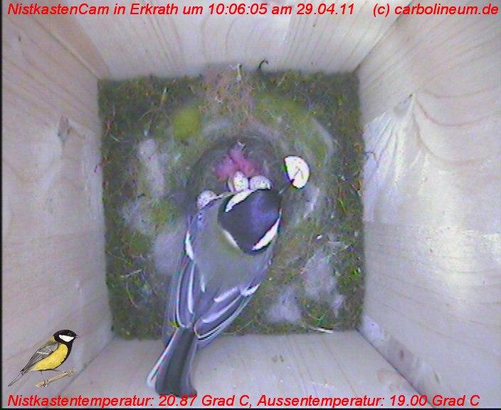 nistkasten-29042011-100605