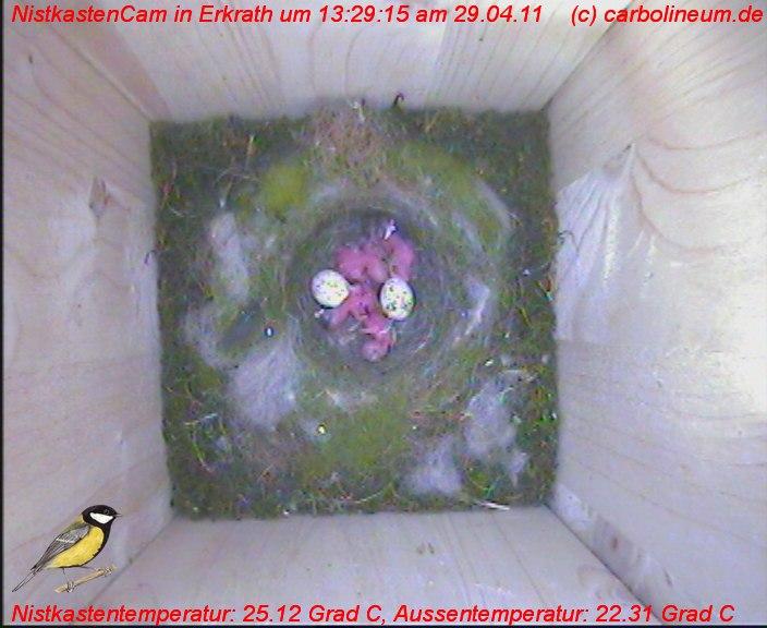 nistkasten-29042011-132910