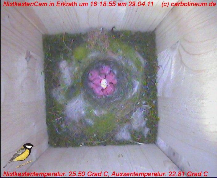 nistkasten-29042011-161850