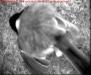 nistkasten-13042010-065850