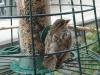 Spatz (Jungvogel) an Futtersäule - hier bleib ich gern sitzen