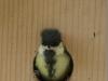 Die neueste Vogel-Punkfrisur