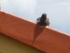 Ich bin der kleine Rotschwanz von nebenan