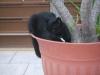 ... denn so richtig nett für die Katze ist es nur im Blumentopf :)