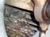 Junge Gebirgsstelzen im Kühler einer Industriekläranlage