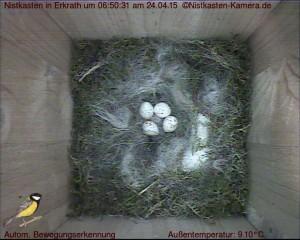 Vier Eier sind es bereits.