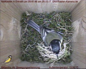 Nest nach nur 24 Stunden