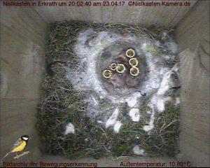 Ein Tag alte Nestlinge