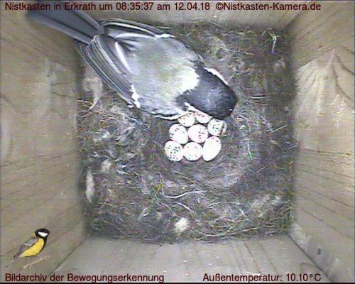 Brutbeginn mit 8 Eiern