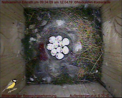Brutbeginn mit 10 Eiern