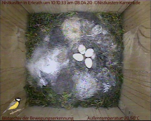 4 Eier zum Ausbrüten